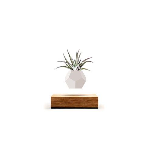 LYFE Planter 1.1 Schwimmende Blumentopf - Eichenholz / Weiß
