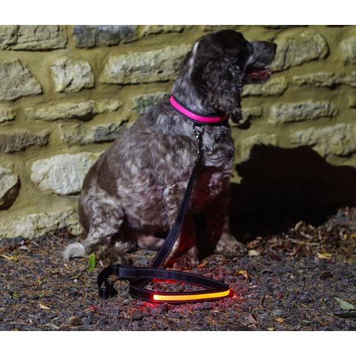 IA LED Light Up Pet Leads - Dog Leash - Pink