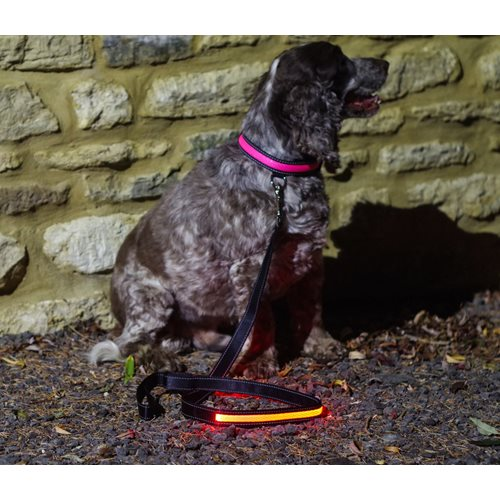 IA LED Light Up Pet Leads - Hondenriem - Roze