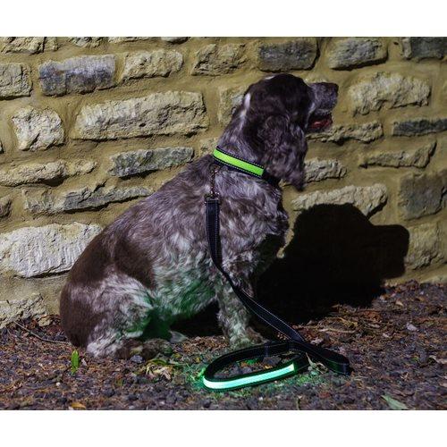 IA LED Light Up Pet Leads - Dog Leash - Green