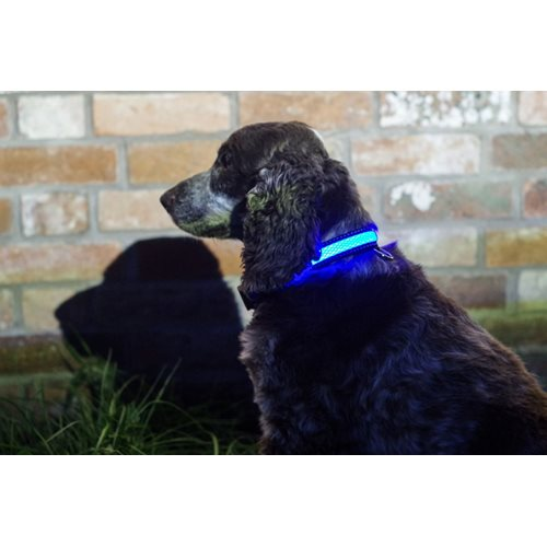 IA LED Light Up Pet Collar - Hondenhalsband - S/M - 31-41cm - Blauw