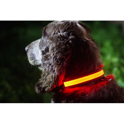 IA LED Light Up Pet Collar - Hundehalsband - S/M - 31-41cm - Rosa
