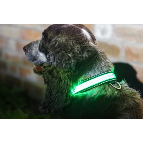 IA LED Light Up Pet Collar - Hondenhalsband - S/M - 31-41cm - Groen