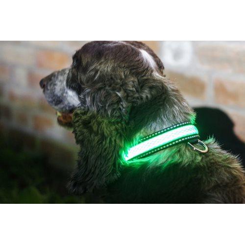 IA LED Light Up Pet Collar - Hundehalsband - S/M - 31-41cm - Grün