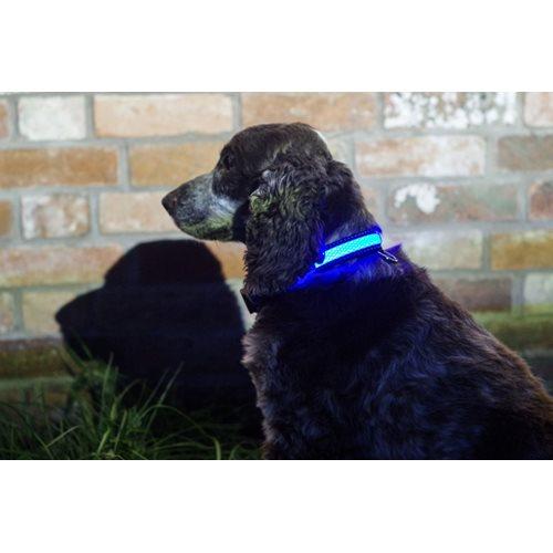 IA LED Light Up Pet Collar - Hondenhalsband - M/L - 41-51cm - Blauw