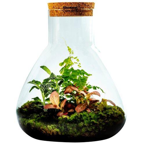 Growing Concepts DIY Nachhaltiges Ökosystem Flaschengarten Erlenmeyerkolben mit Kork Large - Botanische Mischung - H3xØ28cm