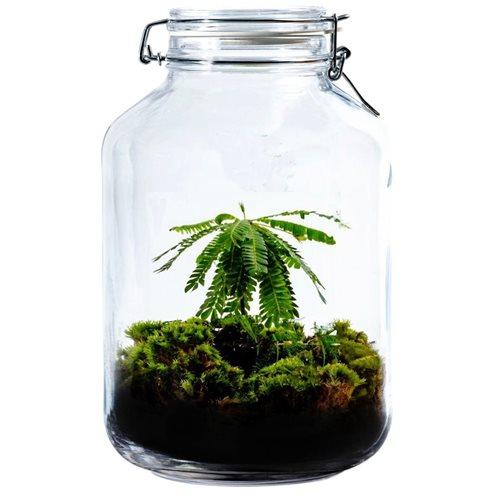 Growing Concepts DIY Sustainable Ecosystem Mason Jar 5L - Biophytum Sensitivum - H28xØ18cm