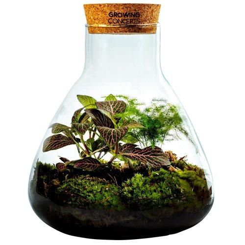 Growing Concepts DIY Nachhaltiges Ökosystem Flaschengarten Erlenmeyerkolben mit Kork Medium - Botanische Mischung - H26xØ22cm