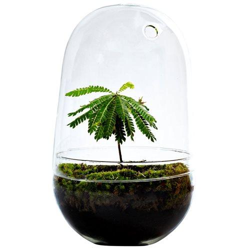 Growing Concepts DIY Nachhaltiges Ökosystem Flaschengarten Egg Large - Biophytum Sensitivum - H30xØ18cm