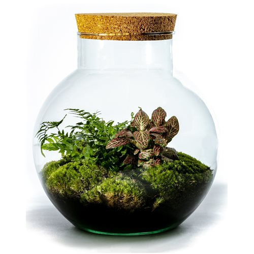 Growing Concepts DIY Sustainable Ecosystem Bolder with Cork - Botanical Mix - H30xØ18cm