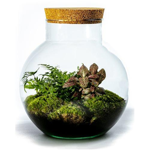 Growing Concepts DIY Nachhaltiges Ökosystem Flaschengarten Kugel mit Kork - Botanische Mischung - H30xØ18cm