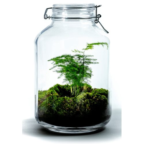 Growing Concepts DIY Sustainable Ecosystem Mason Jar 5L - Aspargus - H28xØ18cm