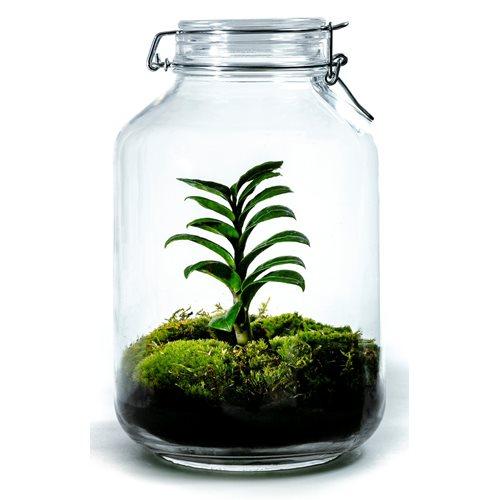 Growing Concepts DIY Sustainable Ecosystem Mason Jar 5L - Zamioculcas Zamiifolia - H28xØ18cm