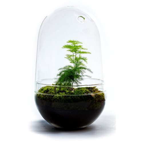 Growing Concepts DIY Sustainable Ecosystem Egg Large - Asparagus - H30xØ18cm