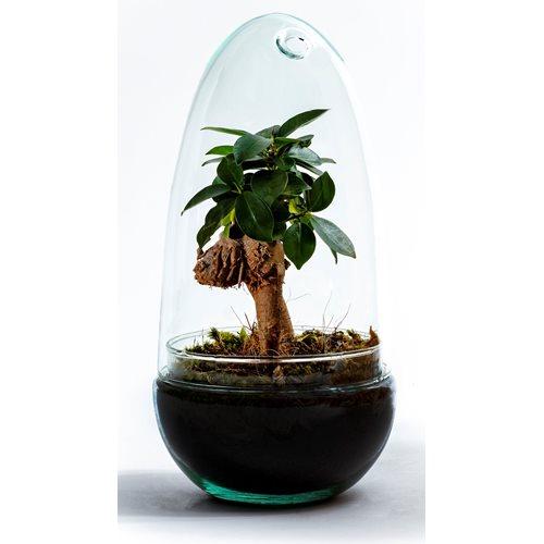 Growing Concepts DIY Duurzaam Ecosysteem Egg Medium - Ficus Ginseng - H25xØ12cm