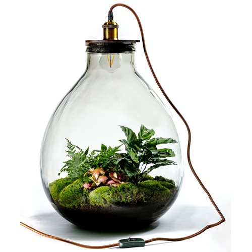 Growing Concepts DIY Sustainable Ecosystem Giants Ecolight XXXL - 34 Liter - Botanical Mix - H52xØ48cm