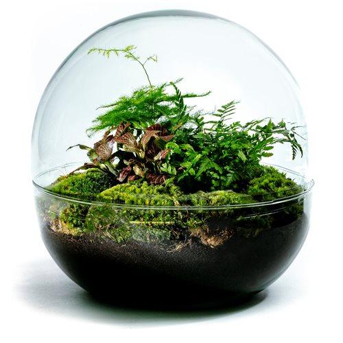 Growing Concepts DIY Duurzaam Ecosysteem Biodome - Botanische Mix - H30xØ30cm