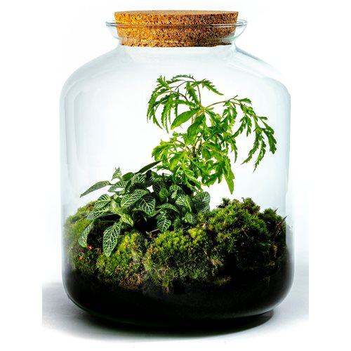 Growing Concepts DIY Duurzaam Ecosysteem Vidar met Kurk - H33xØ16cm