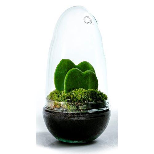 Growing Concepts DIY Sustainable Ecosystem Egg Medium - Hoya Kerrii - H25xØ12cm