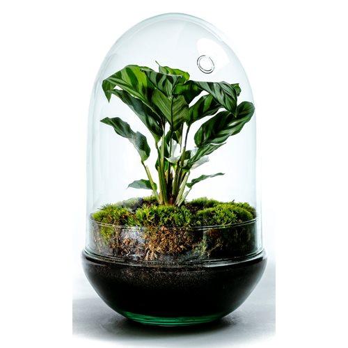 Growing Concepts DIY Duurzaam Ecosysteem Egg Large - Calathea - H30xØ18cm